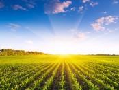 farmland-sunrise-shutterstock_140658412