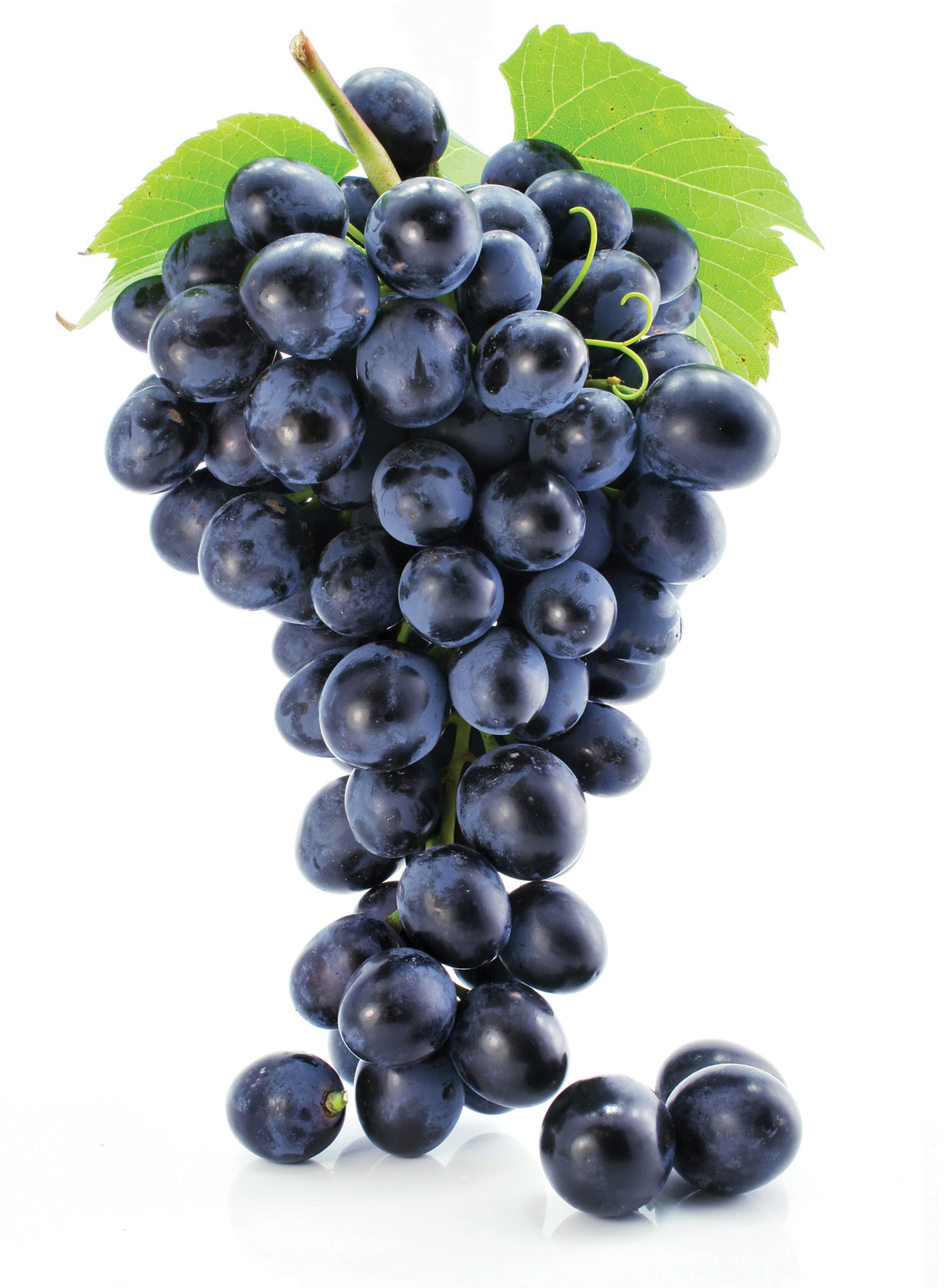 Grape Seed Extract Benefits Growwidely