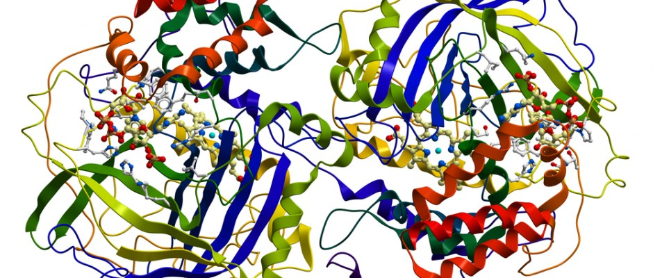 enzyme project Like all catalysts, enzymes work by lowering the activation energy (e a ‡) for a reaction, thus dramatically increasing the rate of the reactionmost enzyme reaction rates are millions of times faster than those of comparable un-catalyzed reactions.
