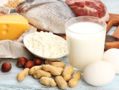 Functional Foods protein food